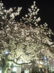 image/2010-04-04T01:36:111